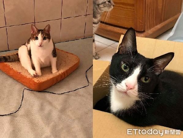 ▲吵著要出去卻因為太冷衝回來的貓咪。(圖/網友周博駿授權提供。)