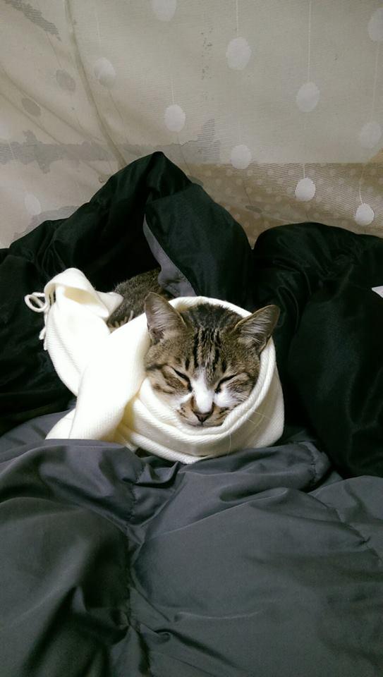 這位媽媽問女兒幫貓換飼料怎麼都不吃,女兒一看照片扶額表示「真的被你打敗了!」