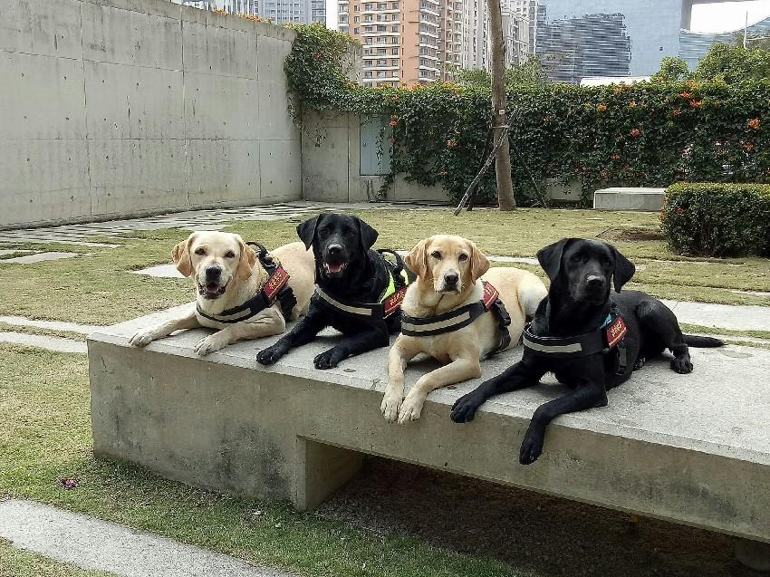 台中市搜救犬。(圖/翻攝「臺中GoGo - 狗狗 -臺中搜救犬」臉書)