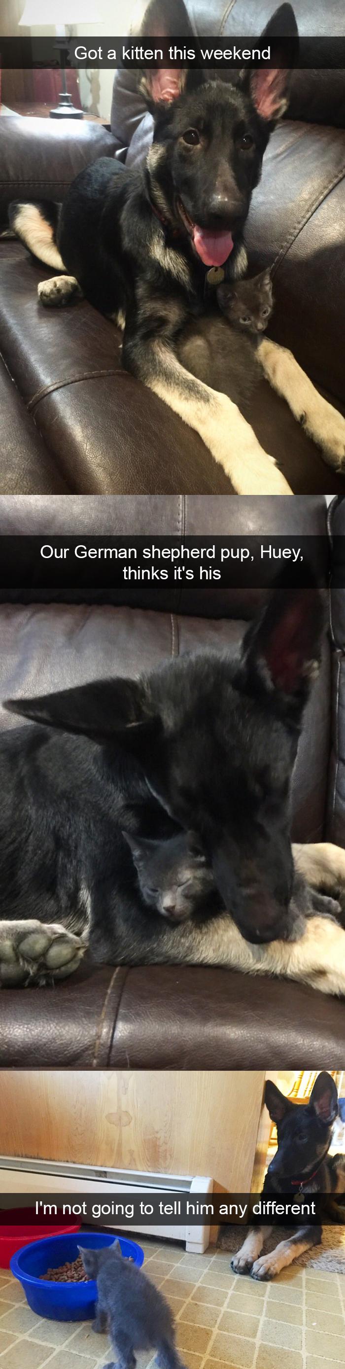 搞笑,狗,照片,Snapchats