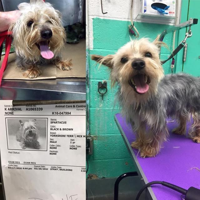 大學MBA畢業后 他選擇給收容所狗狗做免費美容師