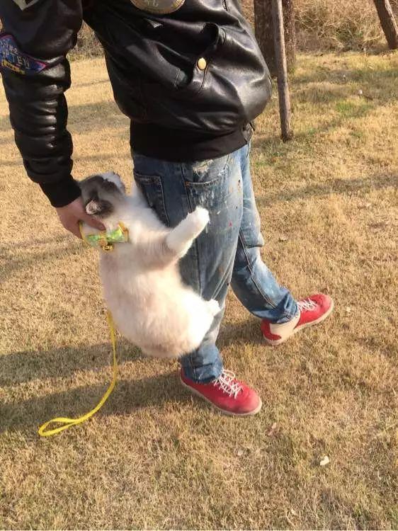 Cười không nhặt được mồm với Boss mèo bám chân Sen mãi không chịu buông